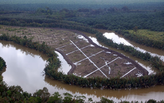 A prime example of an area that should not be cultivated for oil palm and should be reverted back to native forest.  Photo credit HUTAN/Marc Ancrenaz.