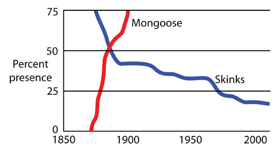 A graph showing the effect of the mongoose—a predatory mammal introduced by farmers in 1872—on native Caribbean lizards. Credit: Blair Hedges, Penn State University.