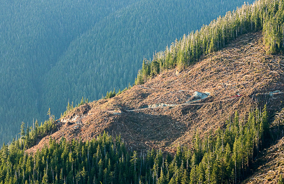With 90percent of Vancouver Island's valley bottom old-growth forests logged, companies are continually moving further up hillsides to get the last of what remains of the original forest ecosystems.