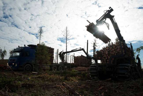 Clear-cutting of an old-growth forest which has never before been affected by modern forestry, on land leased by IKEA/Swedwood in Russian Karelia. Photo © Robert Svensson, Protect the Forest 2011