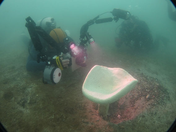 DHI and the National University of Singapore biologist taking a closer look at one of the young Neptune's Cup sponges. Photo courtesy of DHI Group.