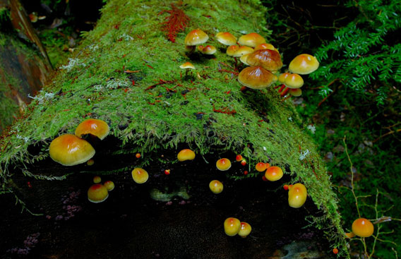 Mushrooms and lichens begin the decomposition of a fallen tree. Many metabolites are created during this process. Photo by: Joseph Dovala.