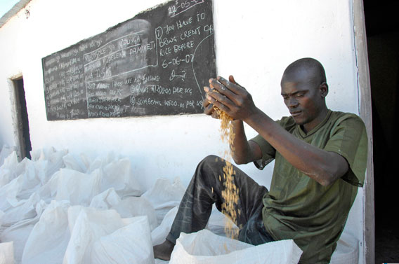 Rice for market in the Luangwa Valley. Photo by: Julie Larsen Maher/WCS.
