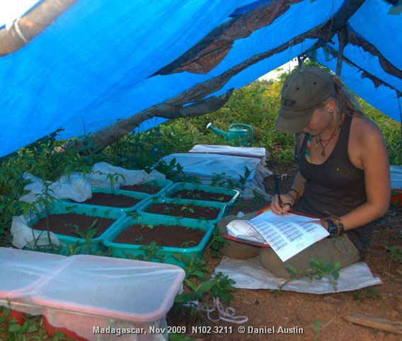 Kara recording germination trial progress, SE Madagascar. Photo by Daniel Austin.