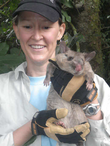 Kivu giant pouched rat at Nyungwe National Park, Rwanda with researcher Kate McFadden. Photo: (c) Kate McFadden, Columbia University, USA.