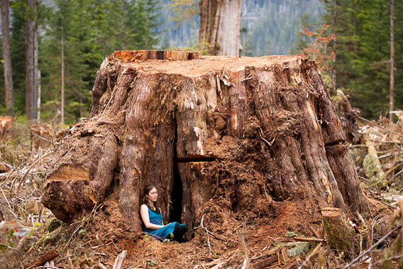 This was a giant, 15ft wide red cedar stump that we discovered in the summer of 2011 cut down in the Klanawa Valley not far from the West Coast Trail. BC's last giants still fall victim to the saw due to the lack of a provincial old-growth policy that would see these endangered forests protected.
