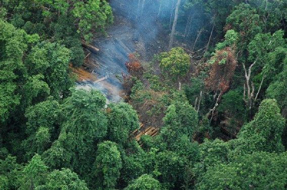 Aerial view of illegal logging in Koh Kong Province where forest activist, Chut Wutty, was shot dead today. Photo by: Paul Mason USAID/Cambodia/OGD.