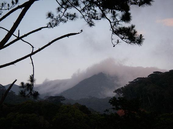 Lang Bian cloud forest in Vietnam. Photo by: Jodi J. L. Rowley/Australian Museum.
