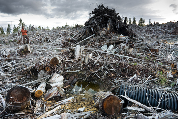 Watt says: 'Here I stood in on my own photo to provide perspective to the piles of waste wood left behind in a typical clearcut.'