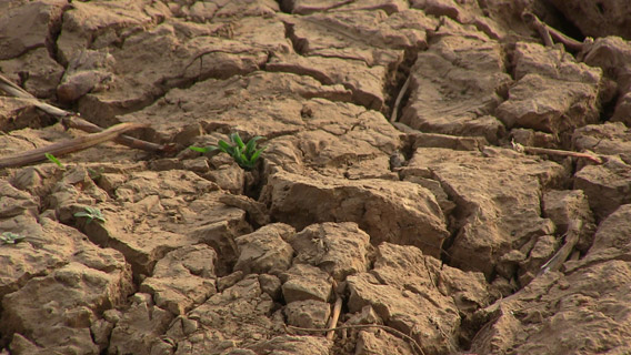 A sprouting plant bakes under the desert sun anchored by dried-up cracking bars of mud and silt deposited over time by Niger River currents. Photo by: Linda Leila Diatta.