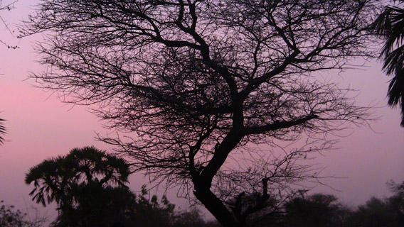 Capturing the last light of an incredibly colored mauve sunset over the Rio Grande gulf in Southern Niger. Photo by: Linda Leila Diatta.