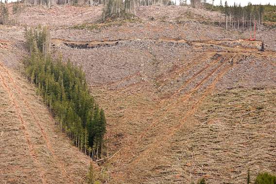 Watt says: 'In this image, deep scars can be seen on a steep hillside after logs have been hauled out of a clearcut along the McLaughlin Ridge near Port Alberni. Biologists have classified the area as critical habitat for wintering deer as well as nesting Queen Charlotte goshawks but logging company Island Timberlands still holds plans to log further along the ridge.'