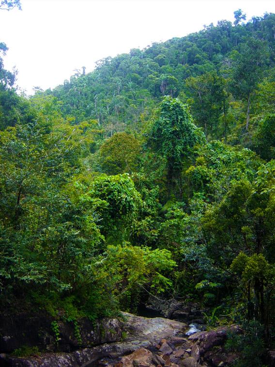 Menavato Mountain in Betampona. Photo by: Gonçalo M. Rosa.