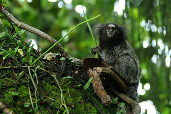 Life shocker: new species discovered every three days in the Amazon