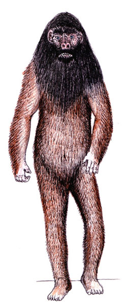 The orang pendak is an unconfirmed primate in Sumatra. Illustration by Tim Morris.