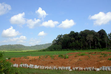 A forest fragment behind rice fields in the Western Ghats. Photo by: M.O. Anand.
