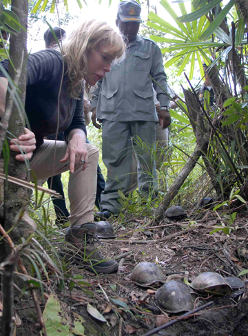 Rereleasing turtles that had been confiscated from illegal wildlife traders. Photo courtesy of: Suwanna Gauntlett.