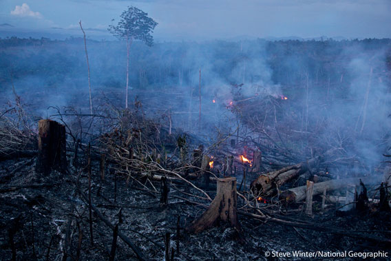 Scorched rainforest in Sumatra. Photo by: Steve Winter/National Geographic.