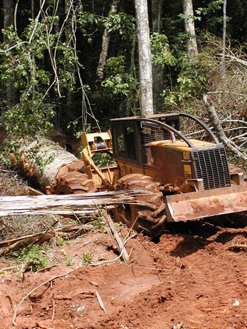Secondary roads, tertiary roads, and skidder trails (like the one above) open up every corner of the forest in the Congo, threatening elephants and over species. Photo by: D. Wilkie.
