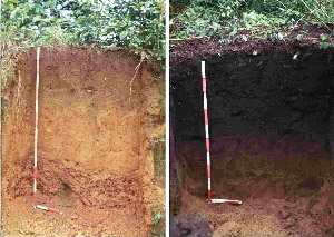 Left: nutrient-poor Amazon natural soil. Right: terra preta, rich dark earth, produced by human impacts in the Amazon. Photo by: Bruno Glaser.