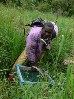 Field assistant, Usman, checking seed traps. Photo by: Matt Walters.