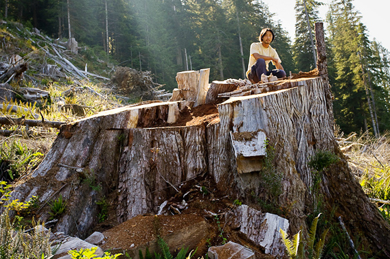 Ken Wu, the Ancient Forest Alliance's executive director, sits perched on a 14ft wide red cedar stump in the unprotected Upper Walbran Valley on Vancouver Island
