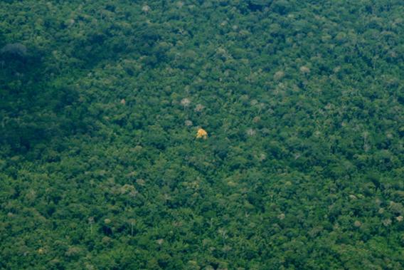 A single tree blooms in the Amazonian canopy of Yasuni National Park.  Photo by: Jeremy Hance.