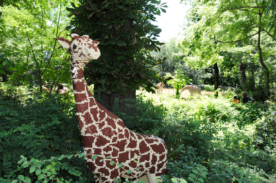 LEGO giraffe with real ones behind it. Photo by: Julie Larsen Maher.
