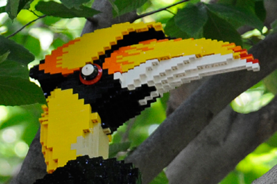 Close up of LEGO hornbill. Photo by: Julie Larsen Maher.
