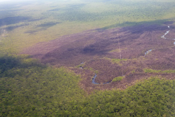 Aerial view of the burned bog in Sarstoon Temash National Park. Prior to burning, the bog would have appeared florescent green due to the sphanum moss. Photo by: SATIIM.