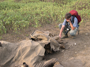 Ahimsa Campos-Arceiz checks a dead elephant, victim of human-elephant conflict in Southeast Sri Lanka. Photo by: Ahimsa Campos-Arceiz.