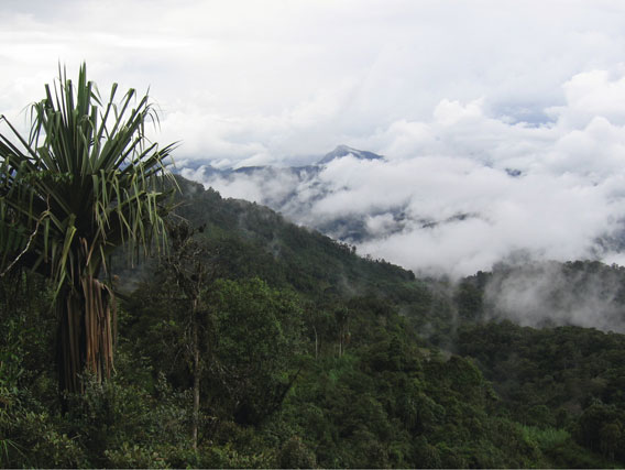 The mid-montane rainforest from a road in  Aseki Province. Photo by: M.Hudson.