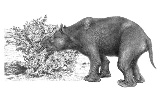 An extinct marsupial mega-herbivore, Diprotodon optatum. Drawing by Peter Murray. Image © Science/AAAS.