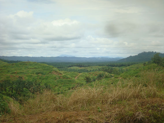 The oil palm plantations surrounding the west of Tabin Wildlife Reserve. Photo by: Penny Gardner.