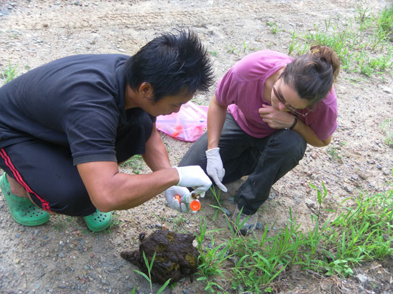 Gardner teaching field assistant to collect banteng dung samples. Photo by: Penny Gardner.