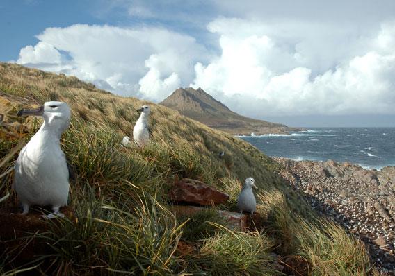 Albatros a lo largo del Mar de Patagonia. Foto por: G. Harris.