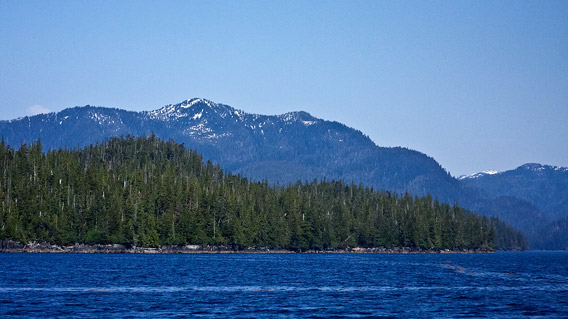 Tongass temperate rainforest.