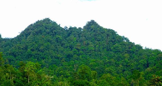 Aussicht auf die Spitze des Gunung Penrissen, Sarawak, malaysisches Borneo. Foto © Dr. Indraneil Das.