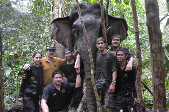 Members of the collaring team with male, Gading. Photo courtesy of DGFC and HUTAN.