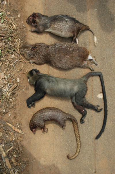 Bushmeat in Cameroon. The bushmeat trade targets rodents (top two), primates (second from the bottom), and pangolins (bottom) among many other species. Photo by: Pierre-Michel Forget.