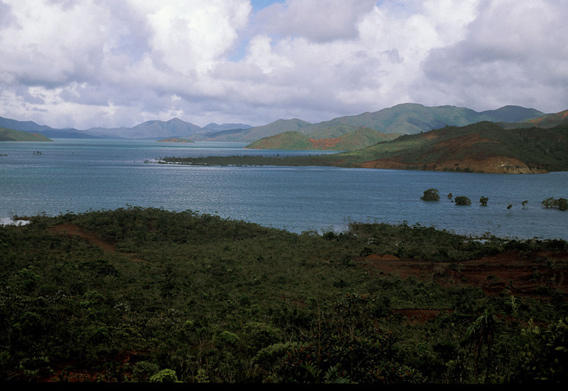 New Caledonia is one of the smallest hotspots in the world. Today, only five percent of its original habitat remains. Photo: © Conservation International/ Photo by Bruce Beehler.