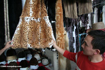 Dealer shows off coats of wild cats in market in China. Photo by: Rhett A. Butler.