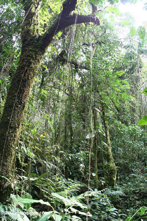 Andean cloud forest in Colombia. Photo by: Rhett A. Butler.