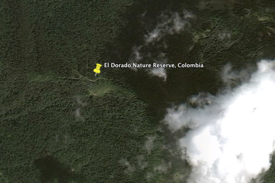 Forest landscape of El Dorado Nature Reserve in the Santa Marta mountain reserve. Image courtesy of Google Earth.
