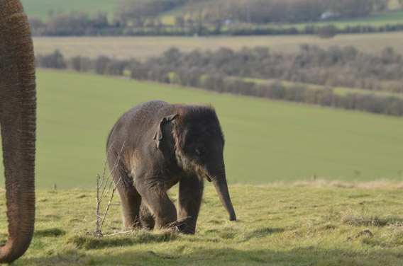 Four-month-old Scott. Photo courtesy of ZSL Whipsnade Zoo.