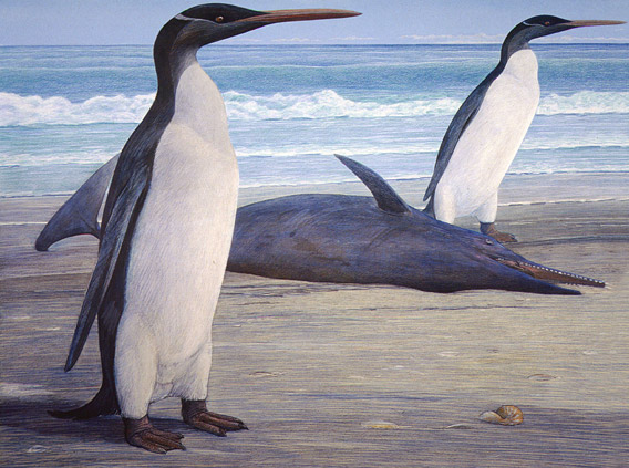 Two Kairuku penguins come ashore, passing a stranded Waipatia dolphin. Artwork by Chris Gaskin, owner and copyright owner: Geology Museum, University of Otago.