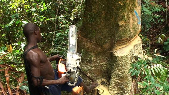 Douglas cutting tree in Papua New Guinea. Photo by: David Fedele.