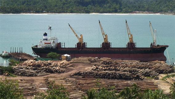 Logging ship at port. Photo by: David Fedele.