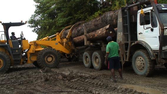 Loading logging truck. Photo by: David Fedele.