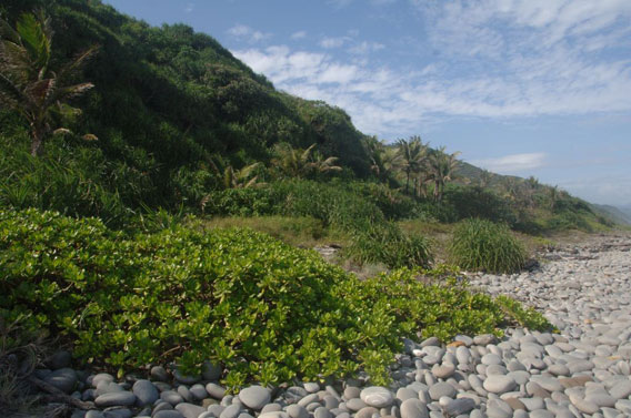 The Alangyi coast lined with endemic palm trees. Photo by: Pierre Fidenci.